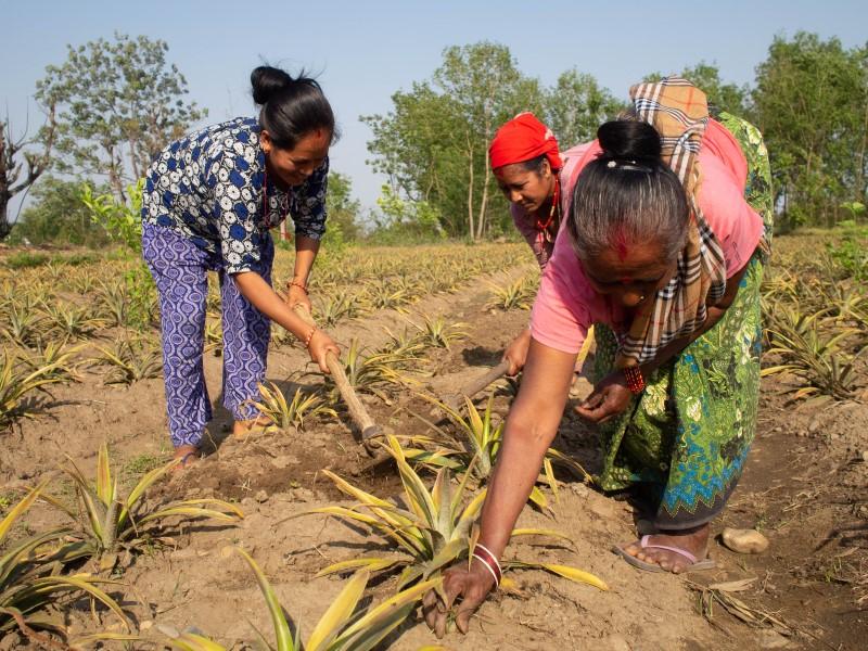 Women working in fields